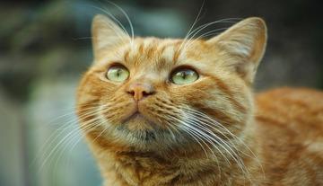 T. S. Eliot: A macskák neve