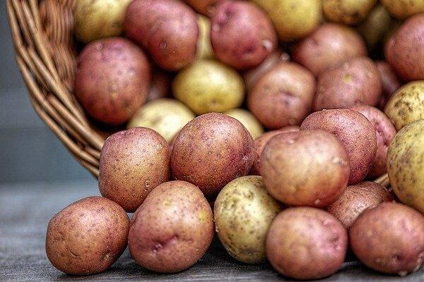 Bali Anikó: Krumpliszedés, Méteres